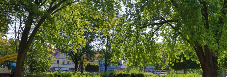 Wiosną miasto zazieleni się i zakwitnie